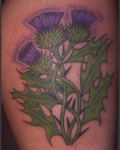 scottish thistle flower tattoos pictures to pin on pinterest tattooskid. Black Bedroom Furniture Sets. Home Design Ideas