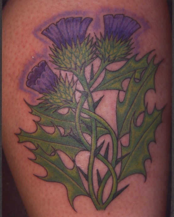Scottish Thistles Tattoos Designs Scottish Thistles: A Photo On Flickriver
