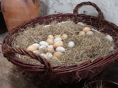 nest, bird nest, food, egg,