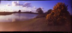 Pond & Gorse 6x12