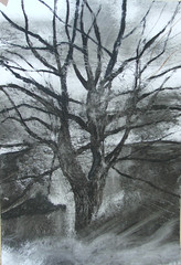 alberonudo