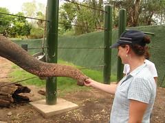 Tania feeds the elephants