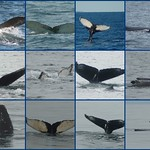 Whale Watching Sept. 18-21
