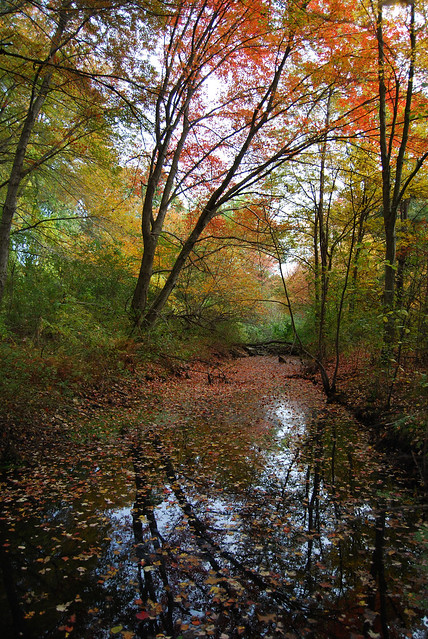 Calm Stream In Autumn Forest Flickr Photo Sharing