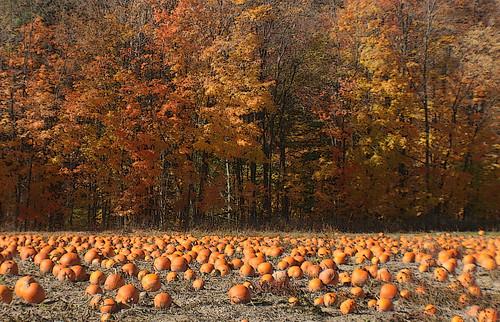 thanksgiving wiki