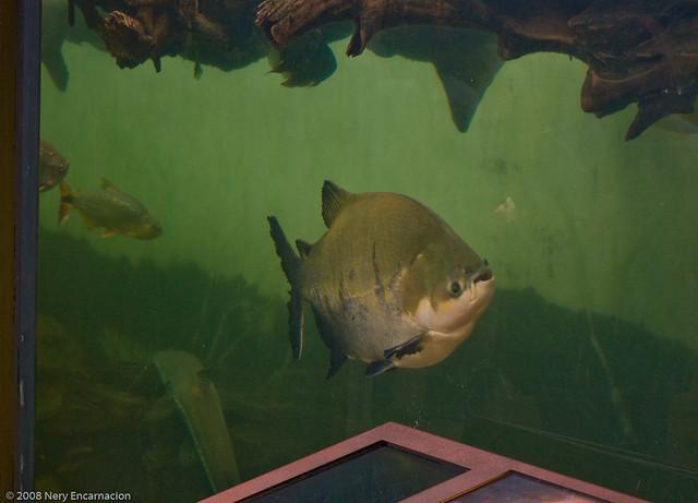 Shedd Aquarium Trip