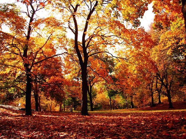 Central Park Autumn Autumn in Central Park