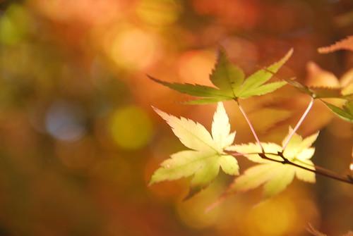 Calm day of autumn