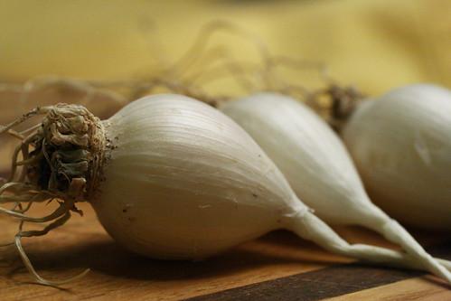 Garlic 03.06.08