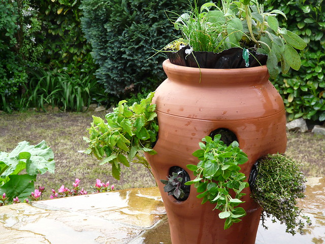 Sage Plant Care: Growing in a Strawberry Pot