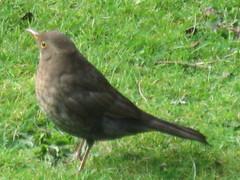 robin(0.0), finch(0.0), stock dove(0.0), blackbird(0.0), nightingale(1.0), animal(1.0), ortolan bunting(1.0), cinclidae(1.0), fauna(1.0), emberizidae(1.0), beak(1.0), bird(1.0), wildlife(1.0),