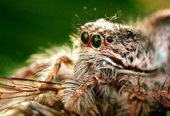 arthropod(1.0), animal(1.0), spider(1.0), nature(1.0), invertebrate(1.0), insect(1.0), macro photography(1.0), fauna(1.0), close-up(1.0), tarantula(1.0), wildlife(1.0),