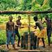 Making palm oil