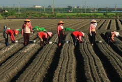 crop(0.0), agriculture(1.0), farm(1.0), sowing(1.0), field(1.0), soil(1.0), farmworker(1.0), rural area(1.0), plantation(1.0),