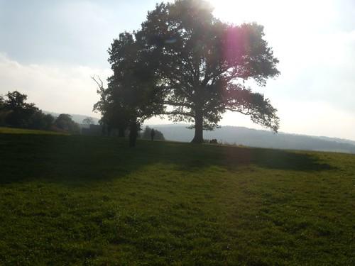 Past a tree
