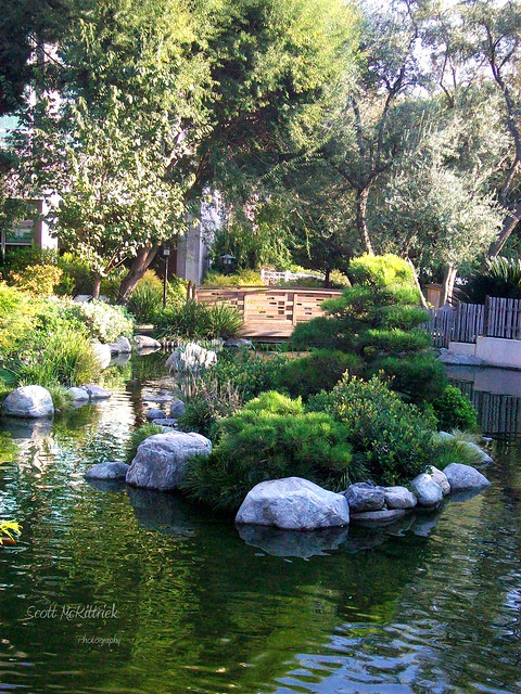 Japanese garden pond flickr photo sharing for Japanese garden pond design