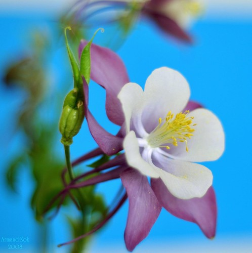 Purple & White flower 1