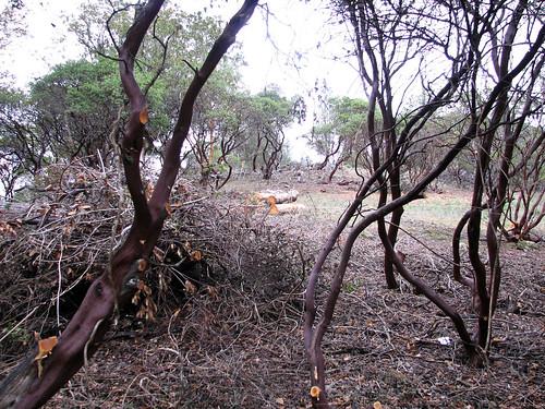 manzanita brooktrails fireabatement
