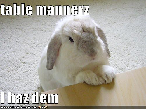 funny-pictures-rabbit-has-good-table-manners