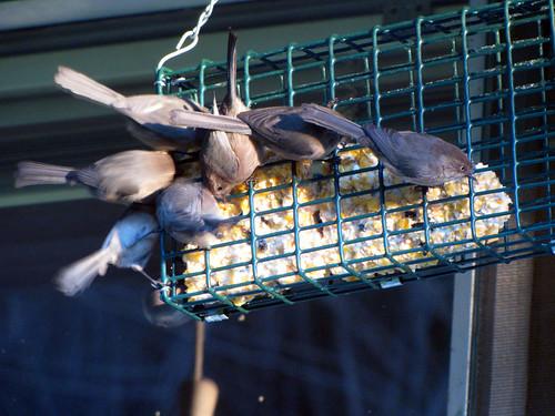 bird suet