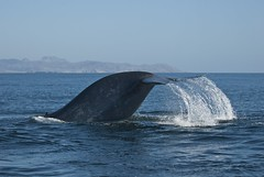 Tail of the whale