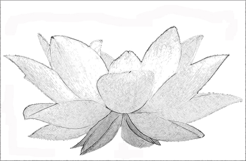 Lotus Flower Sketch Black White white lotus