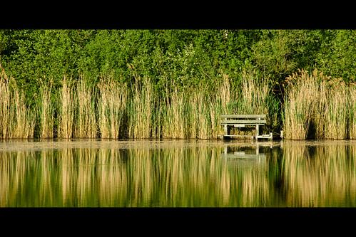trees light sunset lake reflection green reed nature topf25 water colors yellow digital germany bench landscape geotagged dawn evening topf50 nikon colorful europe afternoon dof tl framed d200 nikkor dslr brühl northrhinewestphalia 18200mmf3556 liblar utatafeature manganite nikonstunninggallery liblarersee repost1 date:year=2008 kierdorf geo:lat=50821025 geo:lon=6836999 date:month=may date:day=11 format:orientation=landscape format:ratio=21 repost2