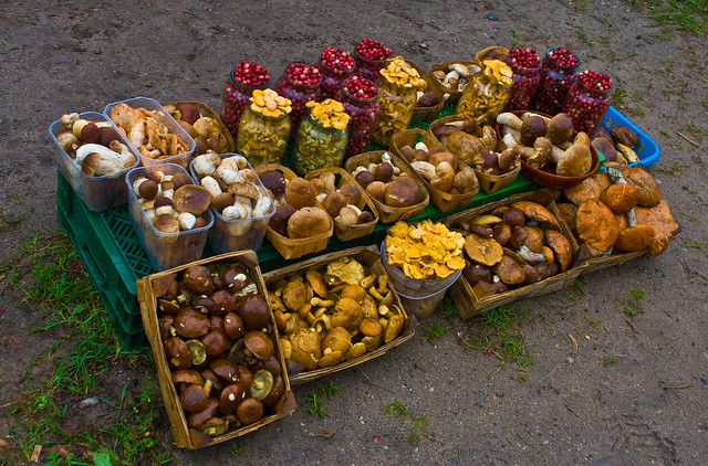 Roadside mushroom stall, Lithuania, 13 Sept. 2008