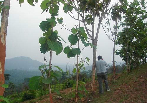 africa peter ghana westafrica ashanti deforestation agogo patriensa asante ashantiregion