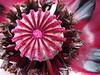 A Magical Flower by skimatt2