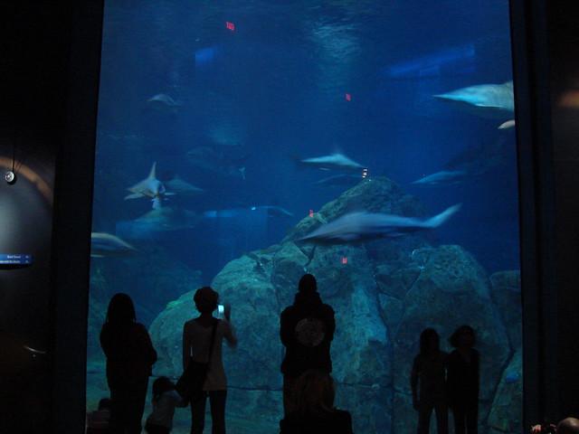 2008 03 16 Camden 021 New Jersey State Aquarium Explore
