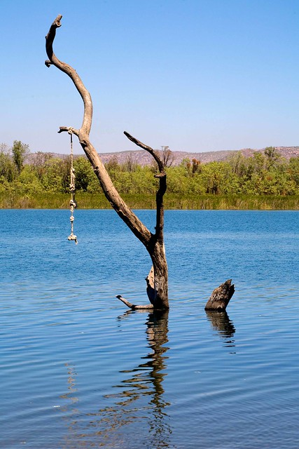 The Swim Beach Tree - Ord River Kununurra, Australia (C) 2008