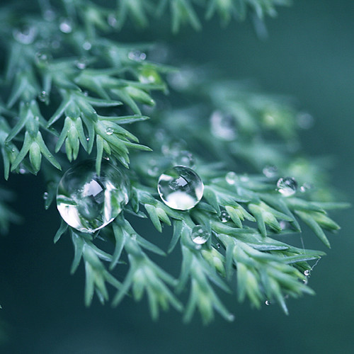 little drops