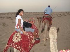matador(0.0), desert(1.0), camel(1.0), arabian camel(1.0),