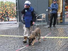 street dog(0.0), conformation show(0.0), animal(1.0), dog(1.0), pet(1.0), mammal(1.0), police dog(1.0),