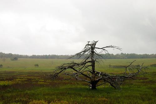 Big Meadow, Skyline Drive (2)