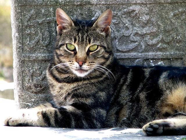 Istanbul Cat 3