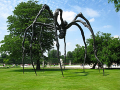 Spider loose in Paris !!