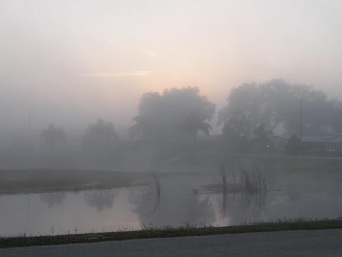 trees mist water sunrise pond glow florida avonpark