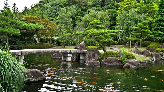 Photo for Japanese garden koi