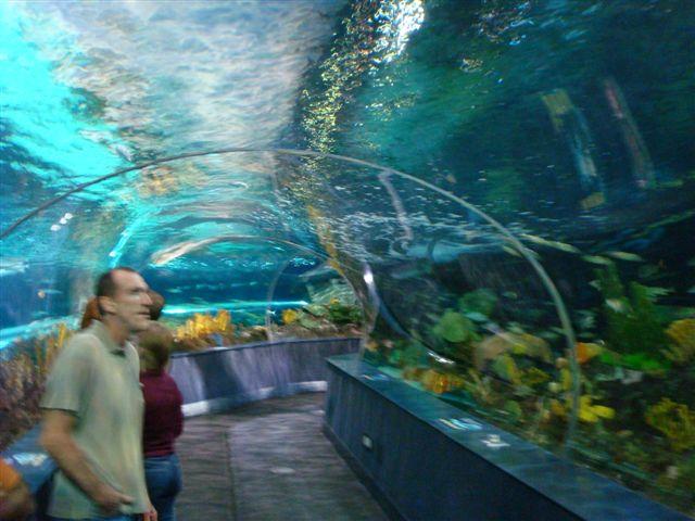 Ripley 39 S Aquarium Of The Smokies Flickr Photo Sharing