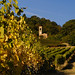 Vigna in autunno - Vineyard