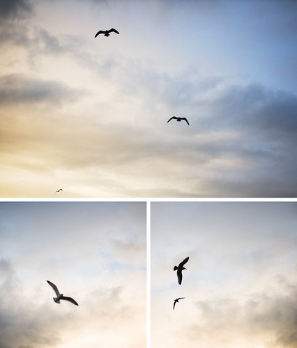 sunset birds clouds flying triptych seagull 2008 eureka bayshoremall
