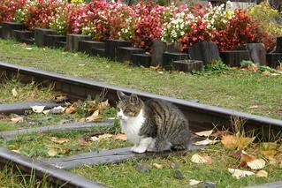 旧手宮線鉄道