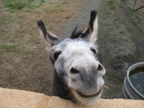 Ugly Donkey  Ugly Donkey
