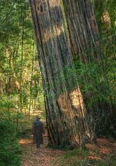 Alex in Big Trees