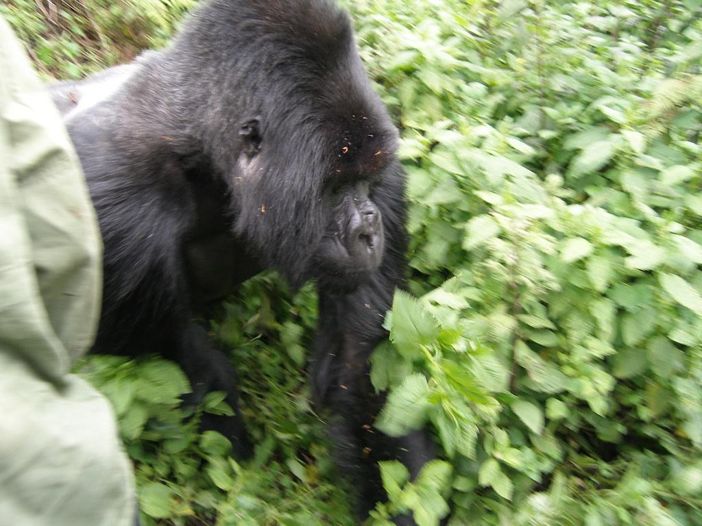 Rwanda031