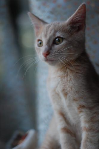 Alvie Pettibone is available for adoption.