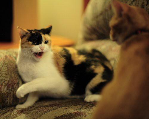 Cat Food Tv Commercial Engachment