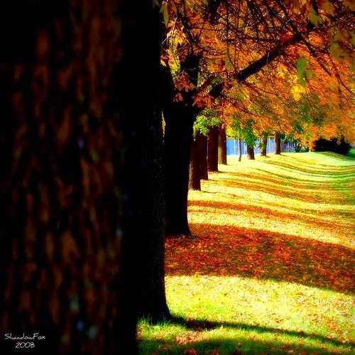 autumn tree fall illinois fiatlux naturesfinest beautysecret photographyrocks anawesomeshot damniwishidtakenthat dragondaggerphoto novavitanewlife